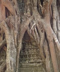 ANGKOR TEMPLES TREES (patrick555666751) Tags: angkor temples trees tree arbres arbre arboles flickr heart group kampuchea asie du sud est south east asia cambodge cambodia angkortemplestrees cambodja camboja cambogia kambodscha camboya