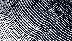 Rail post (Thad Zajdowicz) Tags: wood organic pattern texture lines blackandwhite black white bw zajdowicz pasadena california lightroom outdoor availablelight abstract 366 365 minimalism diagonal geometric parallel angle organicpattern monochrome