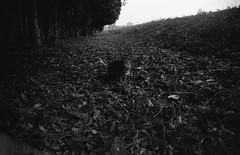 img308 (seeaurora) Tags: vivitar rollei rpx400 film フィルム gtx970