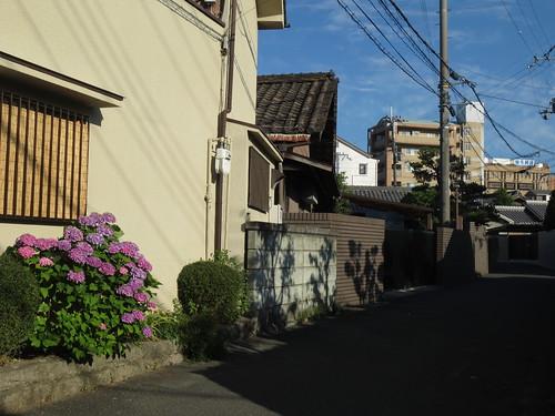 紫陽花のある家