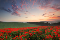 Scarlet Twilight (Alan MacKenzie) Tags: sunset red landscape sussex brighton poppy poppies southdowns falmer leefilters southdownsnationalpark