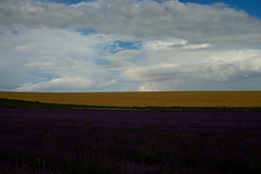 The start of a rainbow on the horizon (IanAWood) Tags: summer hertfordshire hitchin lavenderfarm ickleford hitchinlavender cadwellfarm hitchinlavenderfarm walkingwithmynikon zeissplanart50mmf14zf2 d800e