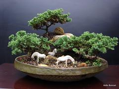 Penjing com juniperus (Aido Bonsai - Paulo Netto) Tags: bonsai penjing aido