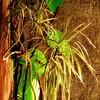 Lumière du petit matin (domiloui) Tags: flowers nature composition lumiere maison lorraine couleur plantes ambiance nuances documentaire cooliris abaucourt blinkagain