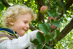 Mmm, apples are ready! (grilljam) Tags: autumn ewan 4yrs rockyridgeorchard september2013
