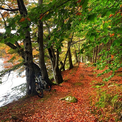 Go stig #hemomkring #rössjön #skogscykling