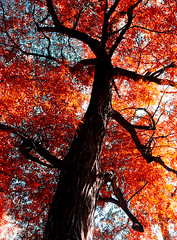 Change of colors (Chris Charalabous) Tags: camera autumn usa color colour tree fall boston lumix photo flickr tag samsung galaxy s3 fz70 chrischaralabous