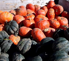 Harvest wagon at the Haliburton County Farmers' Market (Karen @ Wall Flower Studio) Tags: autumn food orange ontario canada fall pumpkin wagon farmersmarket grow organic edible carnarvon haliburtonhighlands 2013 karensloan wallflowerstudio