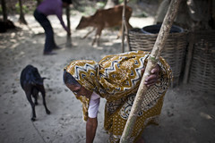 Anowara Begoum lives in Kazipara village. Anowara received a cow and goat to from BRAC through its STUP Special Targeting Ultra Poor. AusAID funds BRAC's work in Bangladesh, its estimated that BRAC works within 70,000 of Bangladesh's 86,000 villages.