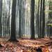 Vertäumter Wald am Morgen