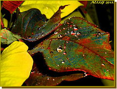 *RAIN... (MONKEY50) Tags: flowers blue autumn red plants brown plant flower color colour macro art colors yellow digital leaf drops colours drop paintshoppro soe natures beautifulphoto flickraward awardtree pentaxart musictomyeyeslevel1