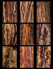 Yosemite - Conifer Tree Bark Panel #1 (www.karltonhuberphotography.com) Tags: california color texture nature project panel patterns details bark yosemite treebark isolation yosemitenationalpark pinetrees yosemitevalley nikkor105mm 2013 pinetreebark nikond7000 karltonhuber