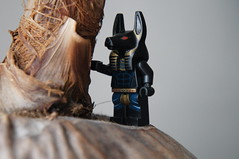 Lego Anubis - On The Oasis (Marco Hazard - Knight of Ren) Tags: wolf jackal lego guard egyptian quest anubis pharaohs inpw