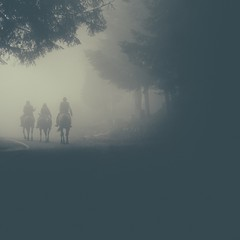 Knights in the fog... (Andrea Settanni) Tags: trees horses italy horse cold fog 35mm nikon italia foggy tuscany nikkor f18 toscana filmgrain filmlook polaroidlook vsco f18g d5100 nikkor35mmf18g afsdxnikkor35mmf18g blinkagain nikond5100 vscofilm andreasettanni