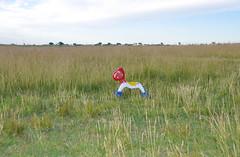 buscando al resto de mi familia (quino para los amigos) Tags: horse argentina toy caballo alone farm soledad busqueda venadotuerto dsc0004