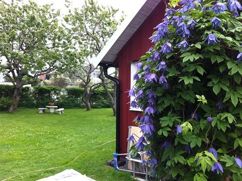 Ernsts Hus - garden in the spring/vår i trädgården