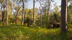 qld trip dec 2013 - 210548 - carnarvon gorge (liam.jon_d) Tags: landscape australian australia qld queensland subtropical subtropics carnarvongorge greatdividingrange maintrail maintrack billdoyle carnarvonnationalpark qldtrip2013 queenslandtrip2013 carnarvongorgesection carnarvonsection