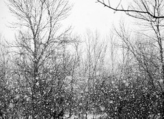Snowfall (Will S.) Tags: trees winter bw snow ontario canada snowing mypics quintewest