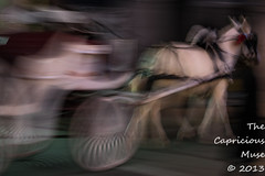 untitled-4648 (TheCapriciousMuse) Tags: nightphotography blur carriage neworleans haunted frenchquarter ghosts horsedrawncarriage louisianna nikond800e pegeus