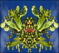 Beware of the giant flying spider crab cactus! (.sanden.) Tags: blue red cactus sky green yellow canon giant flying image flash attack dream surreal imagine mirrored nightmare spines 580ex rorschachtest 40d