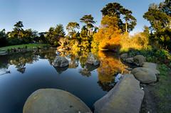 Waterfowl Pond (morozgrafix) Tags: sanfrancisco california goldengatepark sky water pond unitedstates clear botanicalgardens botanicalgarden hdr waterfowlpond nikond7000 rokinon8mmf35fisheye