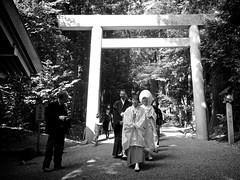 Tsubaki Grand Shrine Wedding (Jake in Japan) Tags: wedding blackandwhite japan shrine sony getty editorial  torii  suzu