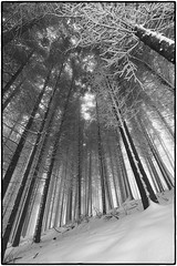 Tales of a Mysterious Forest. Pt. 1: Poise (Xenofon Levadiotis) Tags: trees winter mist snow cold tree ice fog mystery pine forest flora greece evergreen deciduous slope beech poise steep halkidiki       taxiarhis    arnaia      taksiarhis holomon  vision:outdoor=0699
