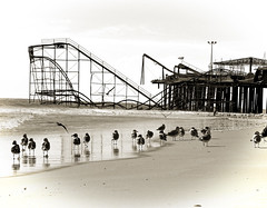 Survivors of the Storm (S C W) Tags: sea seagulls storm sepia pier rollercoaster superstorm hurricanesandy sandyblackandwhite