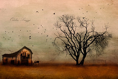 The horse and the house (Odilia Liuzzi Photography - www.odilialiuzzi.com) Tags: flowers trees sea snow painterly flower art texture nature grass rural photoshop canon landscape photography landscapes nikon painted surreal dreams lightroom flypaper texturex