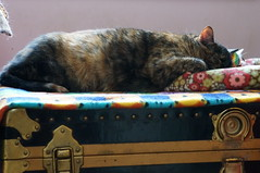 tippinap009 (Lisa/Alex's doll) Tags: cat bed feline nap sleep kitty kitties