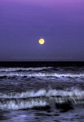 Moon setting at Freshwater West (Simon West Photography) Tags: ocean blue sea sky horses white west waves wave full fullmoon setting pembrokeshire mooon rolling freshwater