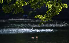 Silver (Varvara_R) Tags: shadow green water sunshine geotagged bokeh abigfave diamondclassphotographer flickrdiamond beyondbokeh