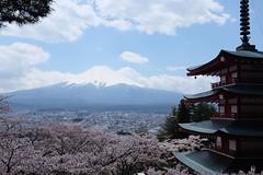 #Mt Fuji from #Chureito #Pagoda shot with #Fuji #X100S (Melvin Yue) Tags: japan cherry tokyo pagoda fuji mt blossom fujifilm fujiyoshida shimoyoshida chureito x100s