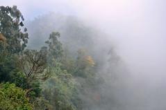 India - Kerala - Munnar - Near Top Station - 21 (asienman) Tags: india mountains kerala hills teafactory teaplantation munnar teapicker asienmanphotography teaplantagens