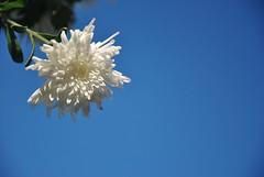 DSC_0007 (Rinswid) Tags: feldman ecopark park nature flowers