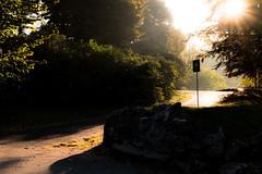 Biking to work... The golden hour at Valentino Park, Turin (Mario Graziano) Tags: ora doro oradoro parco valentino parcodelvalentino torino golden hour goldenhour park turin italy italia morning mattina mattino bike biking lavoro work autumn autunno fall visitpiedmont visitpiedmontitaly piedmont piemonte