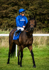 d bai william buick (alastairwilcock) Tags: pontefract races horseracing yorkshire equine jockey