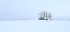 Da mgico de niebla y nieve (Wass2) Tags: arbol nieve paisaje pradenadelrincon