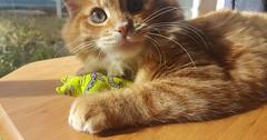 Yogi Bear via http://ift.tt/29KELz0 (dozhub) Tags: cat kitty kitten cute funny aww adorable cats