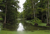 Indianola - Little Pond (Drriss & Marrionn) Tags: bluestrail2014 indianola mississippi usa outdoor nature tree cypresstrees bayou water landscape creek plant plants trees cypress