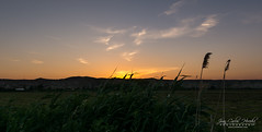 Sunrise (jchmfoto.com) Tags: saragossa sunrise spain europe landscape aragon paisaje zaragoza amanecer es