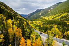 Goodbye Fall (BernieErnieJr) Tags: fall fallfoliage aspen aspentrees aspens trees colorado georgetown frontrange greatphotographers teamsony rockymountains sonya6300 sony18105mmg