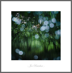 Thick Air (Joe Rainbow) Tags: landscape cornwall icm multipleexposures woodland trees