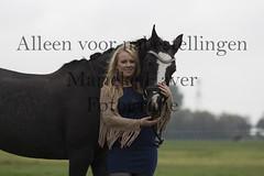 15 oktober 2016-100 (MZorro4) Tags: mariekehaverfotografie oudesluis schagen paardenfotografie portretfotos rijden wwwmariekehaverfotografienlpaarden