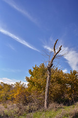 Standing Alone (thefisch1) Tags: creek kansas fall color colorful water tree sky cloud interesting osage cuestas leaves leaf oogle calendar cirrus upright
