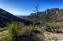 Lost Mine Trail Landscape - 14mm, Big Bend National Park, Texas