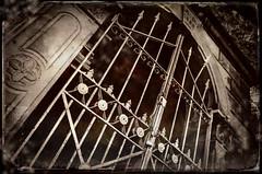 No Future (drei88) Tags: gothic horror fear vault crypt mausoleum bleak grim dead death disturbing charged unsettling stone gate iron lonely desolate halloween d7000 d7k mantua