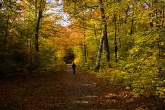 Fall in Gatineau, Queec (sklachkov) Tags: fall gatineau quebec