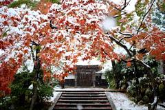 Snowbound (memories of time) Tags: japan kanagawa kamakura kitakamakura temple snow tree 鎌倉 北鎌倉 円覚寺
