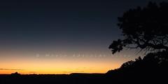 Amanhecer no Yaki Point - Dawn at Yaki Point (adelaidephotos) Tags: amanhecer dawn alvorecer aurora daybreak yakipoint rvore tree parquenacional grandcanyon nationalpark estadosunidos eua unitedstates usa mariaadelaidesilva